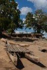 madagascar.baobab.mangoky.31