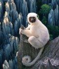 Madagascar : trek dans les Tsingy de Bemaraha - version Tekenessi - Juin 2015