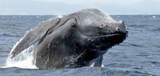 baleine.madagascar