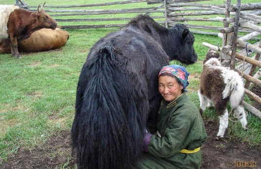 mongolie.trek.lac.khuvsgul.3