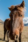 Trek Langtang - Gosainkund - jour 5 -