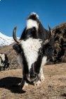 Trek Langtang - Gosainkund - jour 6 -