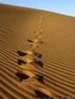 Tchad - retour à chaud de Martine - Première découverte du Sahara...