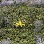 Trek Corridor Forestier : du pays Zafimaniry au pic Boby (Betsiléo, Tanale et Bara) - Madagascar -