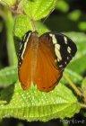 Trek corridor forestier (Madagascar) - Jour 9 Martine