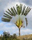 Trek corridor forestier (Madagascar) - Jour 11 Martine