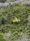 Trek corridor forestier (Madagascar) - Jour 21 Martine