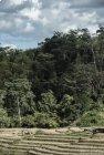 Trek corridor forestier (Madagascar) - Jour 15 Laurent