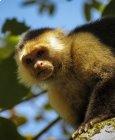 Costa Rica...oui, mais version Martine (Wild)... II