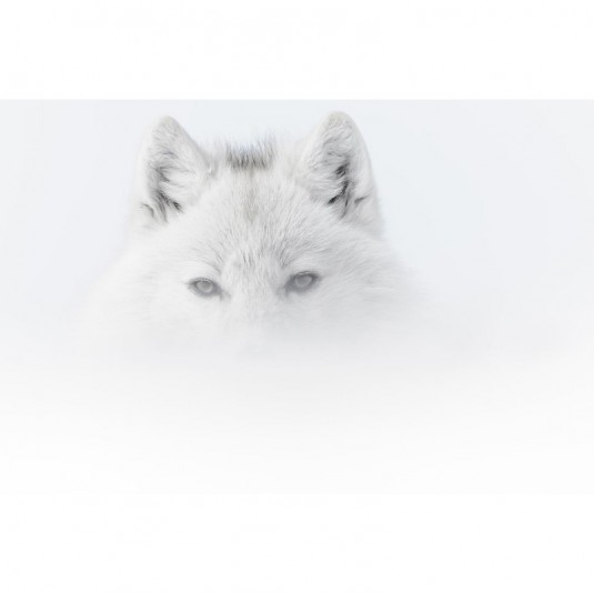 arctique.vincent.munier.1