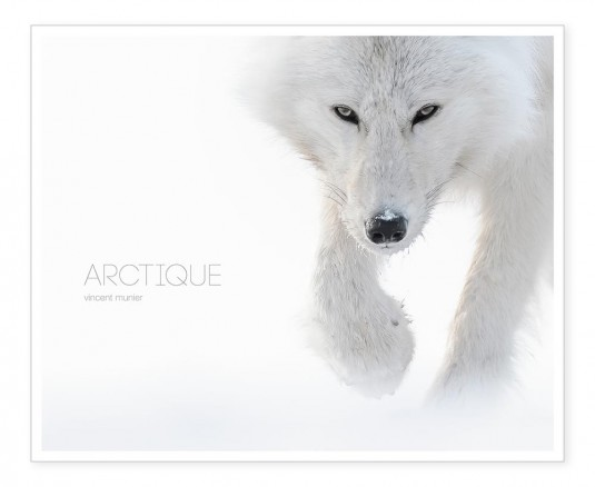 arctique.vincent.munier