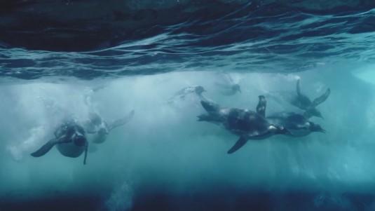 antartica.musa.e.confluence.2