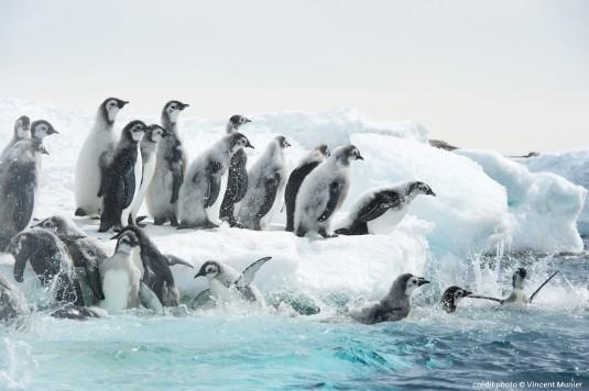 antartica.musa.e.confluence.3