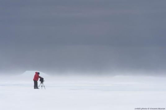 antartica.musa.e.confluence.5