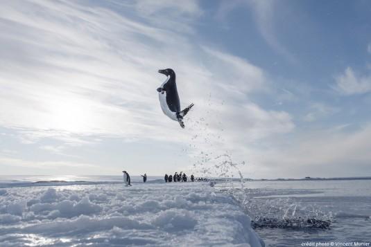 antartica.musa.e.confluence.6
