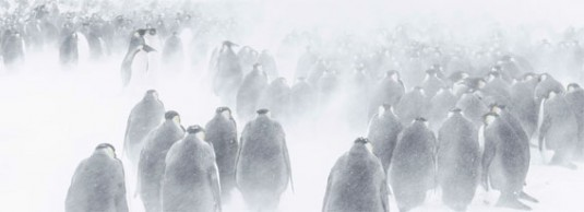 antartica.musa.e.confluence