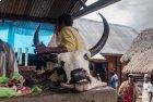 Boucher VS Vegan, la campagne malgache en liesse...