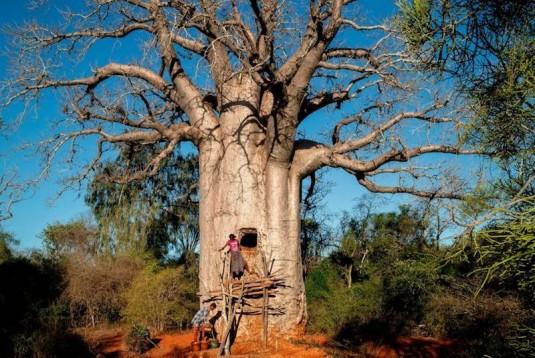 chez.les.creuseurs.de.baobabs.cyrille.cornu.griotte.2