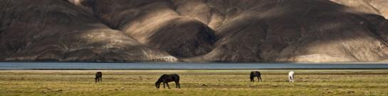 b27/ladakh.changtang.2012.2.jpg