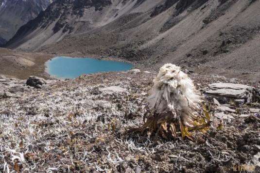 b83/Trek.Saipal.Kailash.Nepal.Tibet.5.jpg