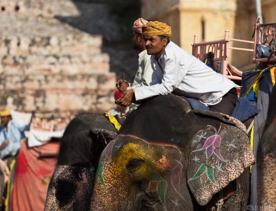 n108/elephant.jaipur.amber.rajasthan.1.jpg