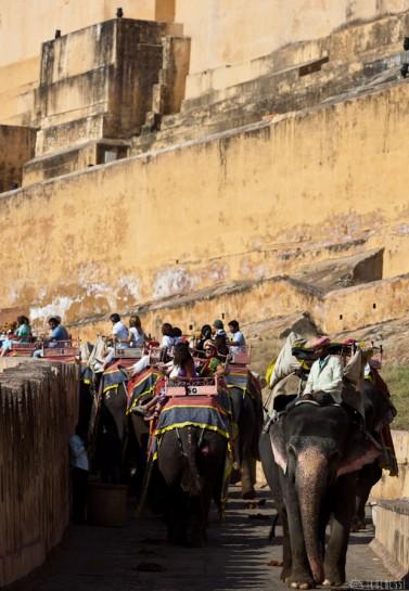 n108/elephant.jaipur.amber.rajasthan.2.jpg