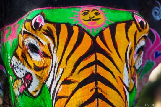 n108/elephant.jaipur.amber.rajasthan.3.jpg