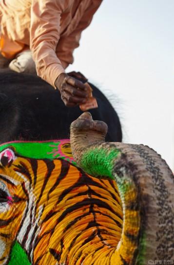 n108/elephant.jaipur.amber.rajasthan.4.jpg