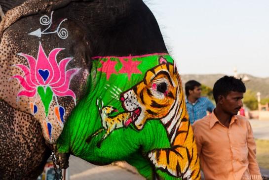 n108/elephant.jaipur.amber.rajasthan.5.jpg