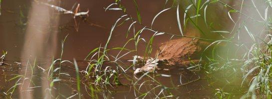n146/tchad.ennedi.archei.crocodile.1.jpg