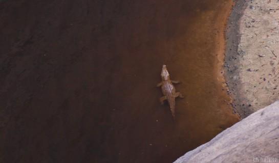 n157/tchad.ennedi.archei.crocodile.1.jpg