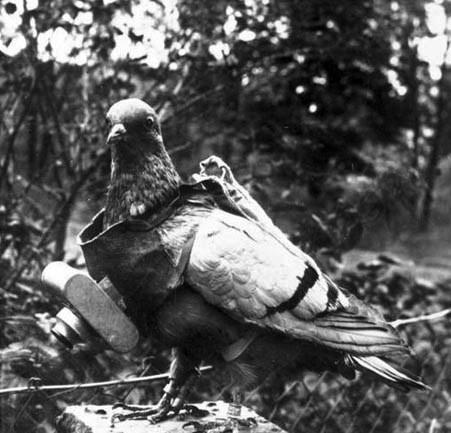 n254/gopro.pigeon.2.jpg