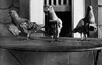 n254/pigeons.jpg