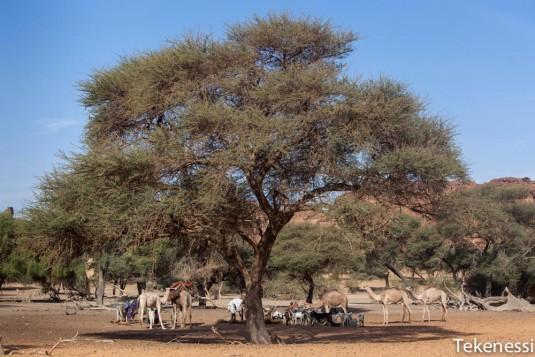 n259/tchad.ennedi.trek.2012.12.jpg