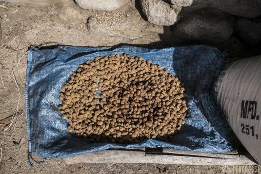 n421/ladakh.leh.abricot.amande.16.jpg