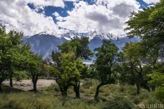 n421/ladakh.leh.abricot.amande.6.jpg