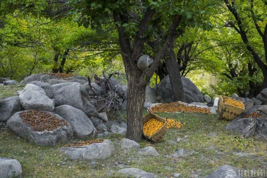 n421/ladakh.leh.abricot.amande.7.jpg