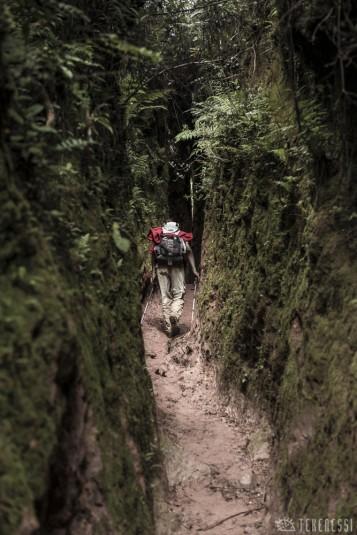 n481/corridor.forestier.trek.madagasar.146.jpg