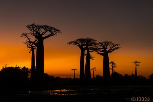 n522/allee.baobab.madagascar.12.jpg