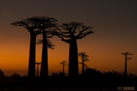 n522/allee.baobab.madagascar.16.jpg