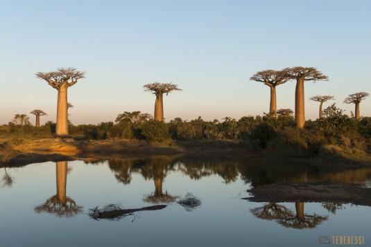 n522/allee.baobab.madagascar.5.jpg