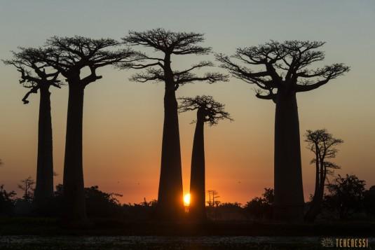 n522/allee.baobab.madagascar.7.jpg
