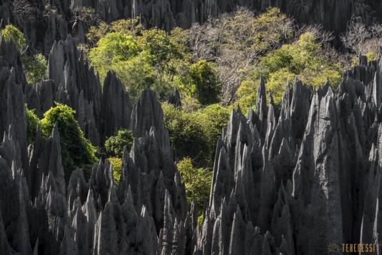 n527/tsingy.madagascar.bemaraha.3.jpg