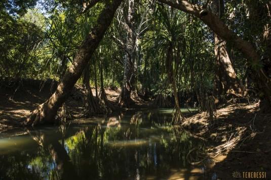 n527/tsingy.madagascar.bemaraha.4.jpg