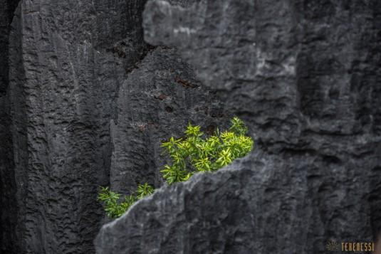 n533/parc.tsingy.trek.madagascar.bemaraha.part.2.7.jpg