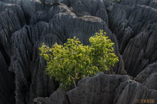 n536/parc.tsingy.trek.madagascar.bemaraha.2.jpg