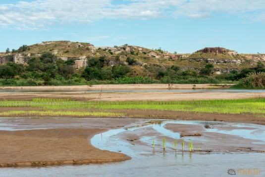 n540/riz.decrue.tsingy.madagascar.bemaraha.4.jpg