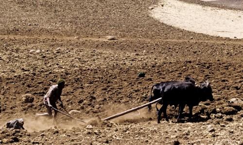n58/terres.ethiopie.accaparement.1.jpg