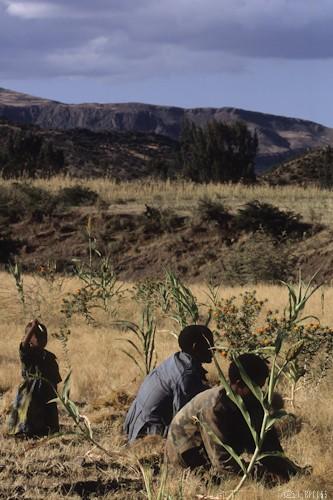 n58/terres.ethiopie.accaparement.5.jpg