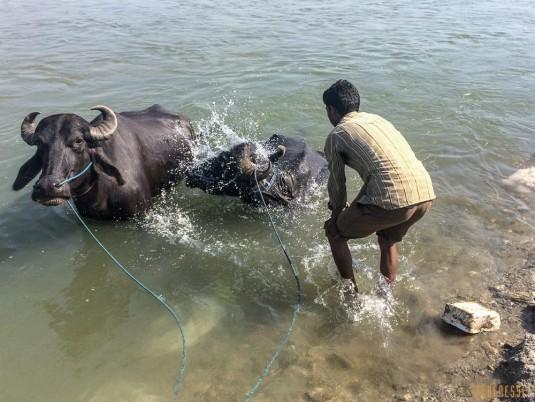 n642/Bhadrapur.Mechi.TraverseI.e.NeI.pal.10.jpg
